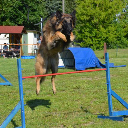 Hundeschule Guenther agility